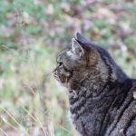 暖冬だけど…冬毛の猫