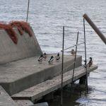 玉野市・八浜漁港を見てきたよ!
