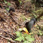 【草ヒロ】玉野市の山で謎の車が埋もれていたよ!