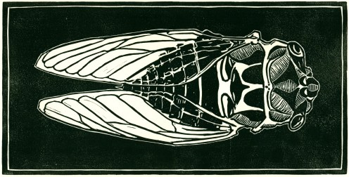 """Cicada."" Linoleum block print, 12"" x 6"", 2014."