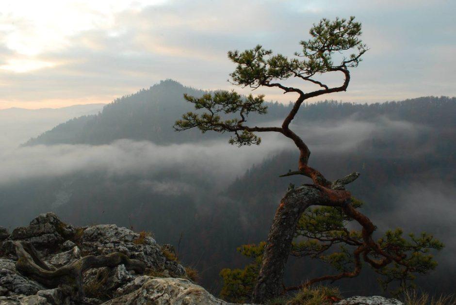 foto by Janusz Wojtarowicz