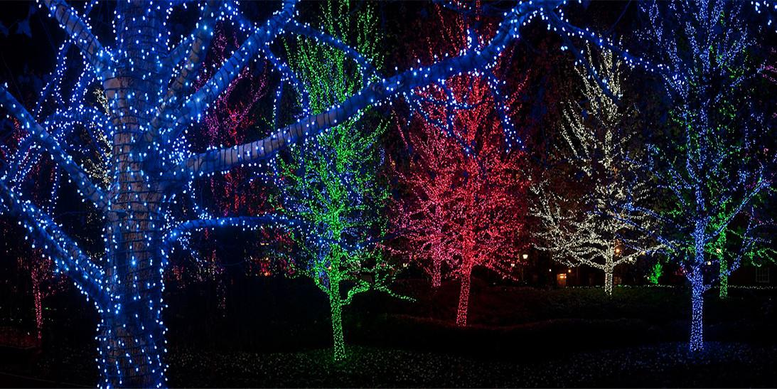 Installed Christmas Tree Lights