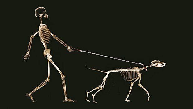 huesos-cuerpo-humano-cuantos-c