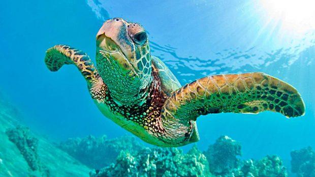 ¿Cuántos años viven las tortugas? - Tortugas marinas