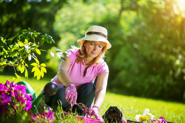 Cómo cuidar rosas blancas