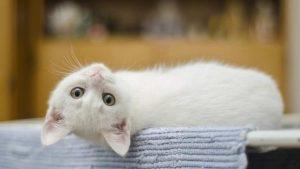Comportamiento gato