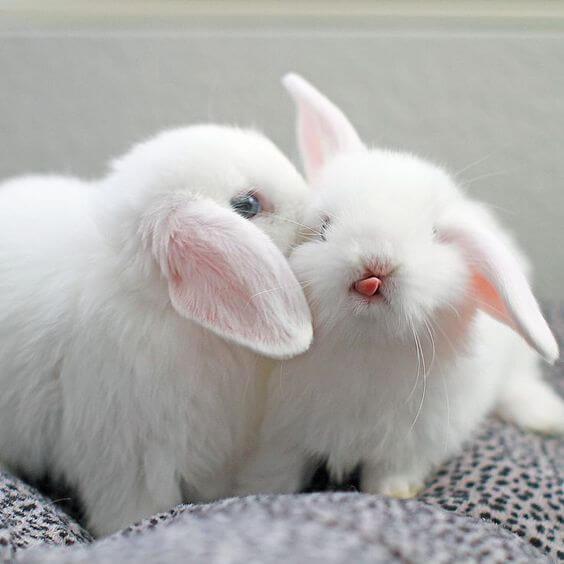 kelinci lucu 7