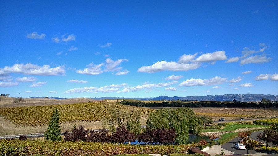 View from Domaine Carneros, Sonoma County.