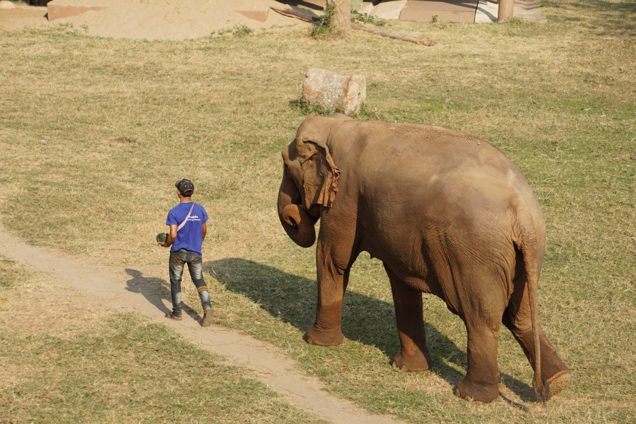 Elephant parade, Elephant nature Park, Thailand, gentle giants