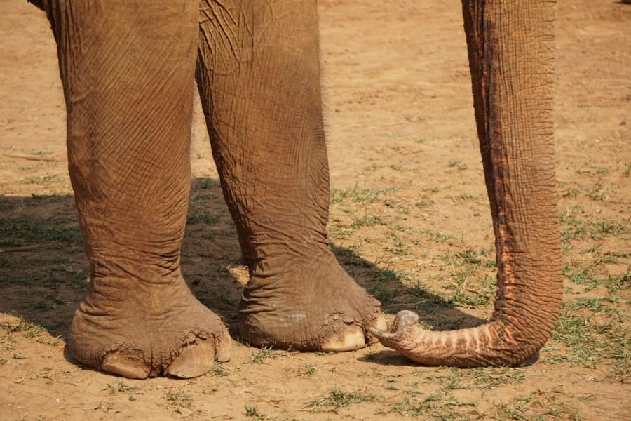 elephant trunk, Elephant Nature Park, Thailand, responsible tourism, gentle giants