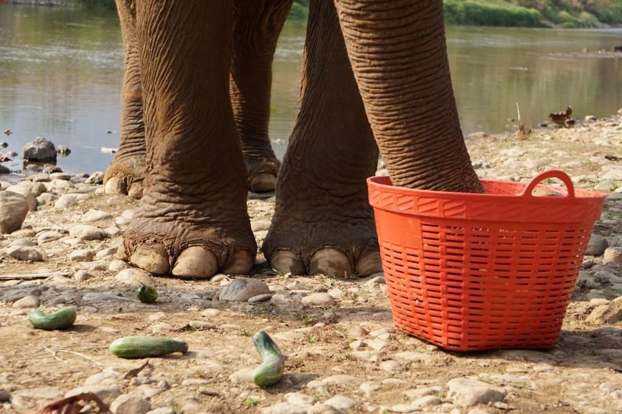 picky eater, Elephant Nature Park, Thailand, responsible tourism