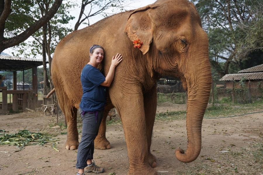 Elephant Nature Park, volunteer, gentle giants, responsible tourism, Thailand