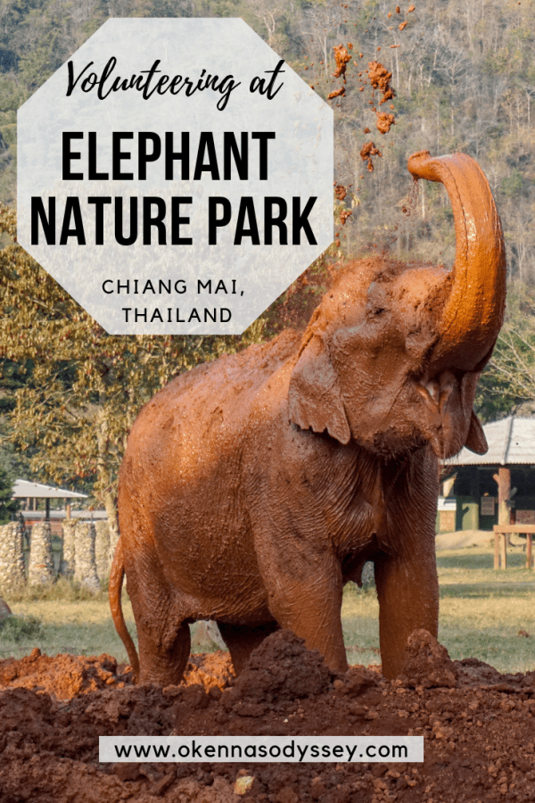 What to expect when volunteering for a week at the Elephant Nature Park near Chiang Mai, Thailand