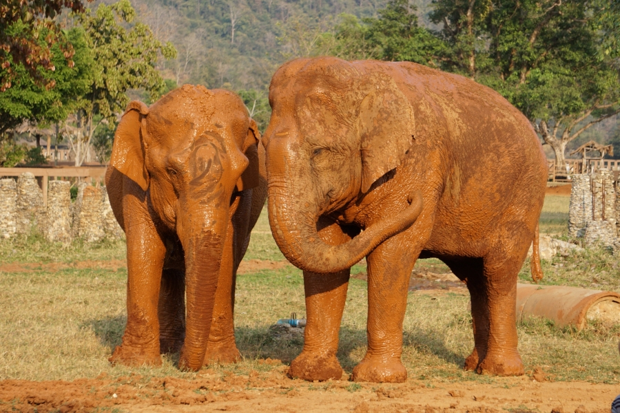Elephants, Southeast Asia, volunteering, Elephant Nature Park, responsible travel