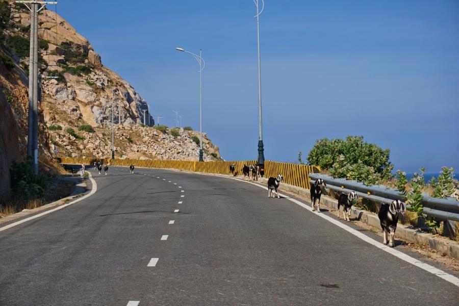 Local traffic, coastal road, Vietnam, landscape