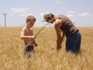 Wade and Bo pulling rye out of the wheat field.