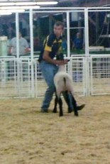 Kody shows a lamb at the Ottawa County Fair.
