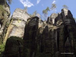 drzewa na szczytach skał