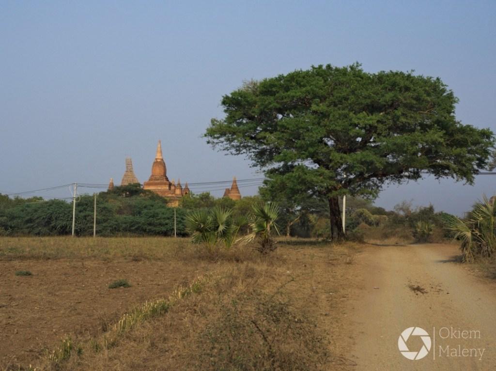 drogi Baganu