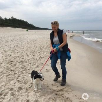 Polski owczarek nizinny - pierwsze spacery nad morzem