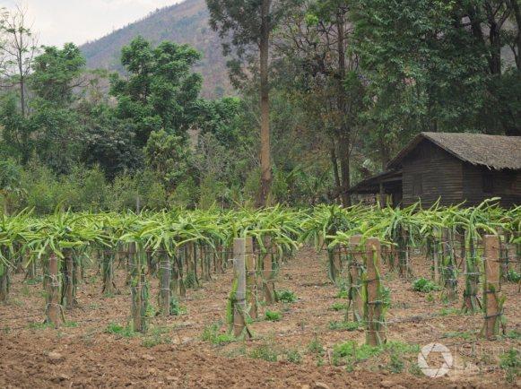 okolice Nyaung Shwe