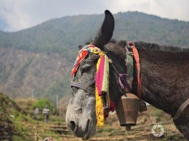 w drodze z Bamboo do Jhinu, Nepal, treking