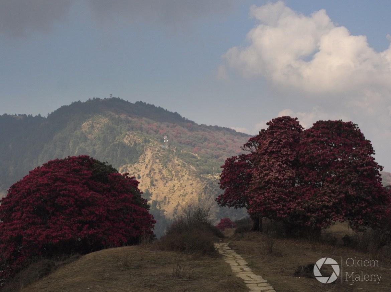 Poon Hill widziane z drogi do Tadapani