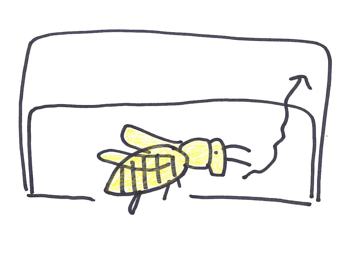 スズメバチとぶ
