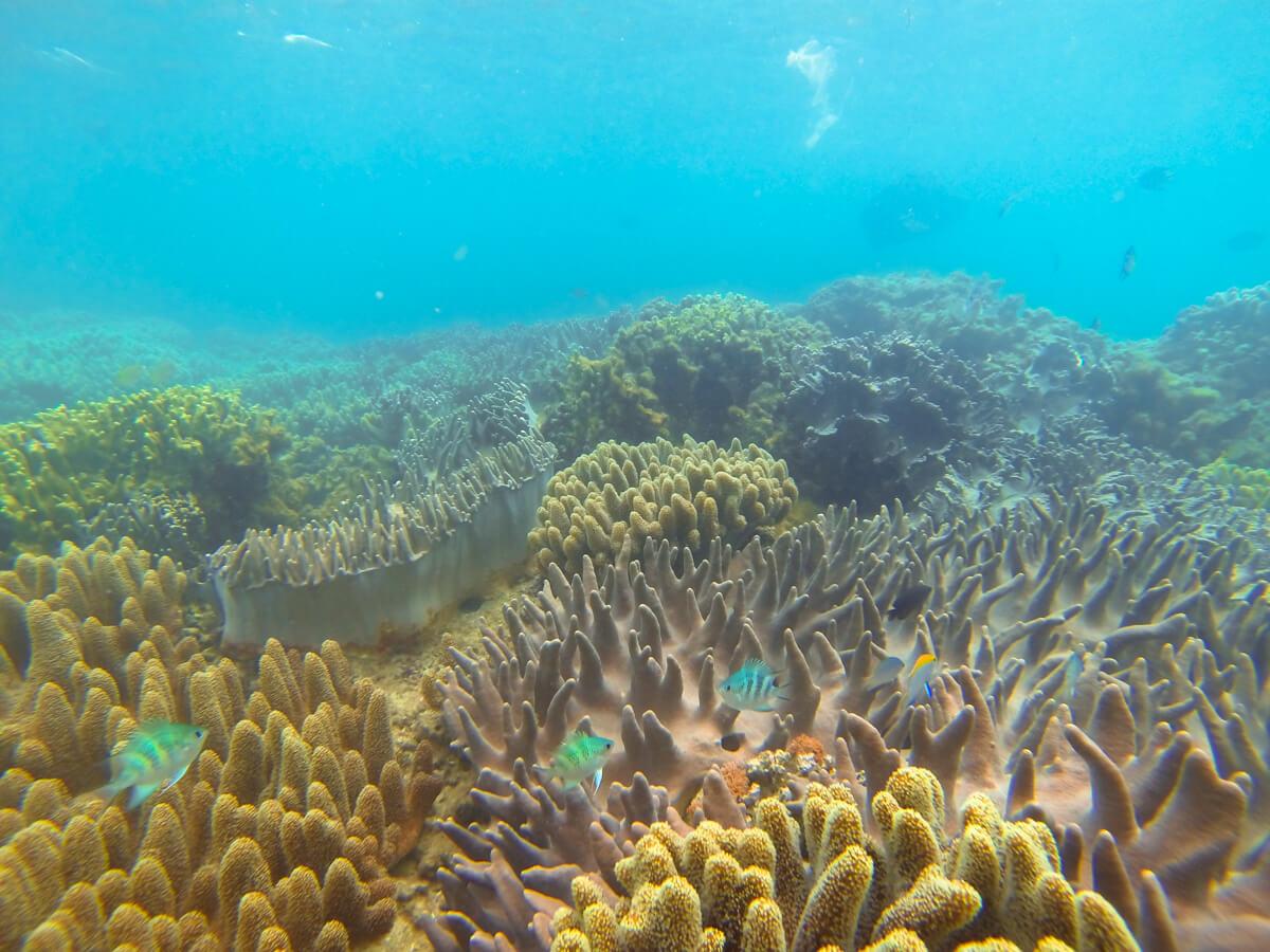 サンゴと魚の群れ