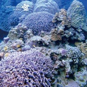 海と自然塾ビティ No.41