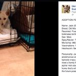 Pet Adoption OAARS   Okinawa Hai