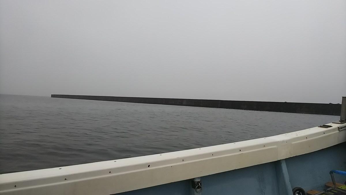 志布志港と福島港で豆アジが釣れていました