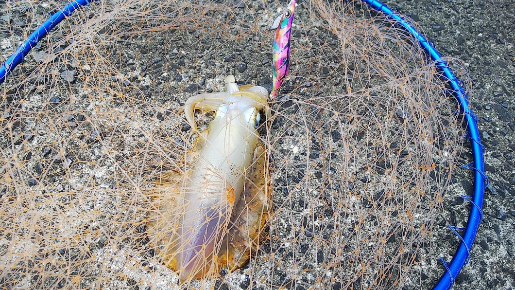 釣り禁止と豆アジ調査の話