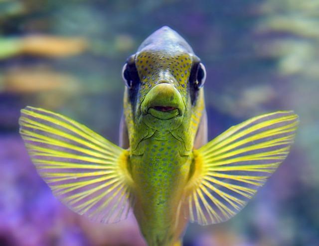 桂浜水族館ツイッター,ツイッター マーケティング