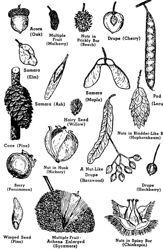 Plants Identification Native Oklahoma