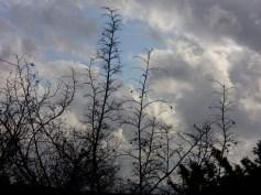 drača,oštra...oblaci...slobodni...