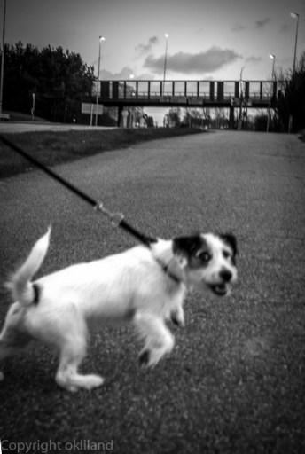 Hund i Sandnes