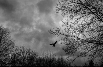fugl som skal til å fly i Sandvedparken