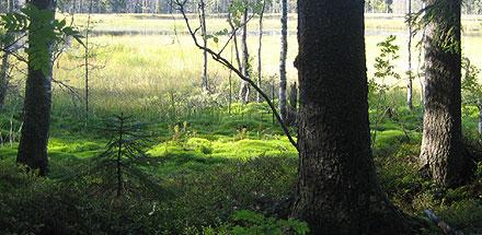 Trollskog i solsken