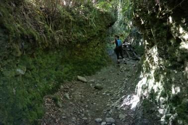 Staza kroz džunglu