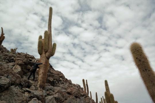 Anna grli gigantski kaktus
