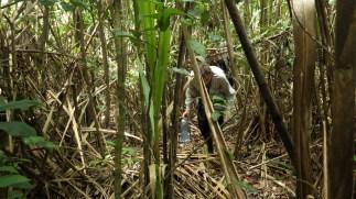 Luka probija kroz prašumu (ne odmara).