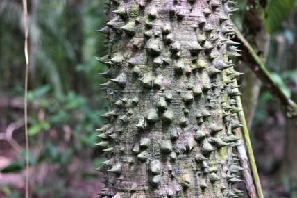 Metal stablo (ne miče se, vjerojatno odmara)