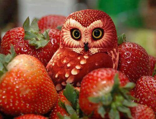 fruit_art_2