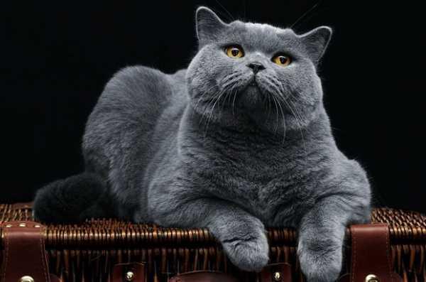 Как кормить кошку сухим кормом правильно: инструкция для ...