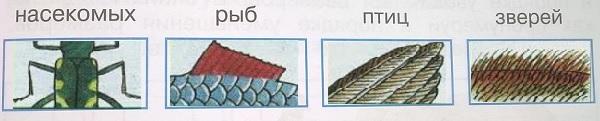 Схематические рисунки насекомых рыб птиц зверей