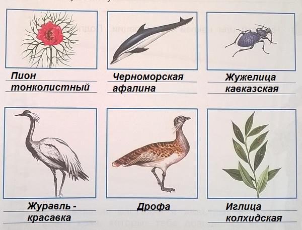 Растения Арктики Названия И Фото