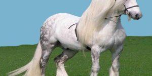 at2 1 300x150 - Atlar nasıl ayakta uyuyabiliyorlar?