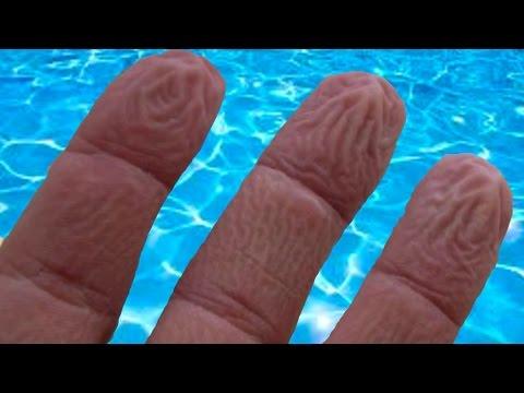 Banyodan Sonra Ellerimiz Niçin Buruşur?, okugit