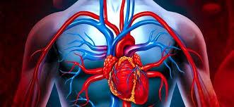 Kanımız Kırmızı İken Damarlarımız Niçin Mavi?, OkuGit.Com - Tarih, Güncel, Kadın, Sağlık, Moda Bilgileri Genel Bloğu